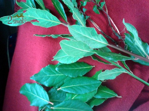 Włochy kulinaria - liście laurowe
