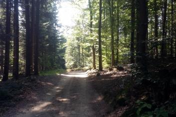 Bieganie w Beskidzie - 5 dzień 7